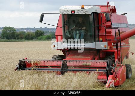 Massey Ferguson red combine harvester in wheat field newtownards county down northern ireland - Stock Photo