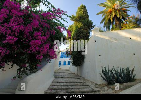Narrow cobbled streets draped in Bougainvillea are a feature of Sidi Bou Said - Stock Photo