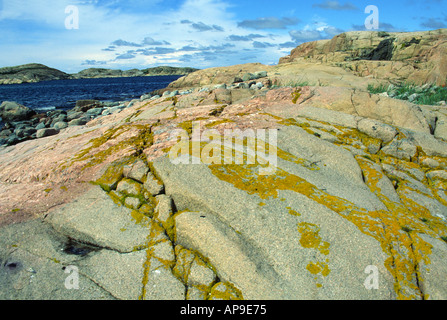 Yellow lichen grows on pink granite on a small island on the west coast of Sweden - Stock Photo