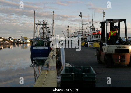 Unloading fish from fishing boats on the quay in Twillingate harbour, Newfoundland, Canada - Stock Photo