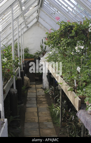 Row of plants in a traditional wooden greenhouse in the Old Town Museum Den Gamle By, Arhus Denmark - Stock Photo
