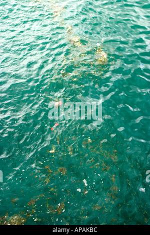 pollution in sea in a harbor - Stock Photo