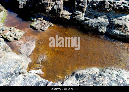pollution in sea in a beach in spain - Stock Photo