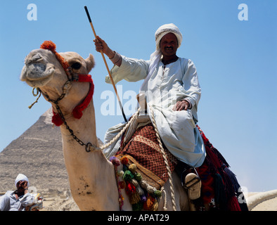 Bedouin On Camel Giza Plateau Cairo Egypt North Africa - Stock Photo