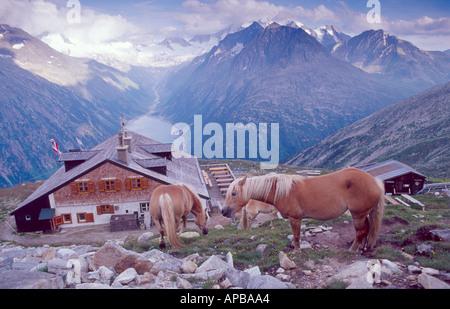Horses beside the Olperer hut, Berliner Hohenweg walking route, Zillertal Alps, Austria - Stock Photo