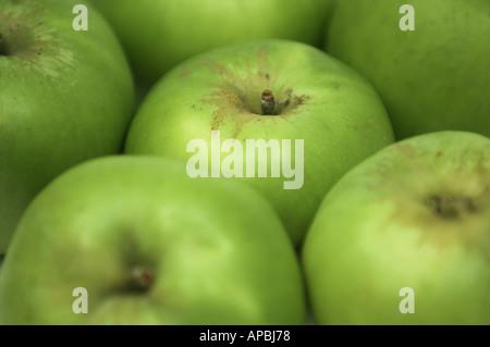 Cooking Apple Bramley Fruit Bramley Apples - Stock Photo