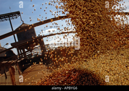 Loading of a truck with soy beans by the 'Companhia de Armazens e Silos do Estado de Minas Gerais' (CASEMG) in Uberaba - Stock Photo