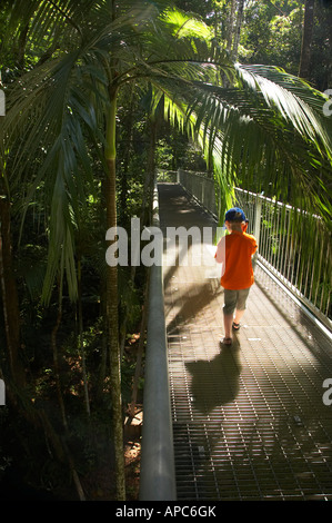 Boy on Aerial Rainforest Canopy Walkway Daintree Discovery Centre Daintree National Park World Heritage Area North - Stock Photo