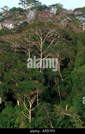 Panama Camino de Cruces National Park Setting sun lights rainforest jungles north of Panama Canal - Stock Photo