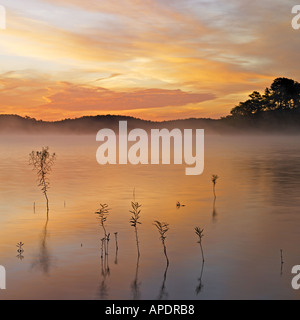 Highlighted by sunrise skies are reflecting in pond's water - Stock Photo