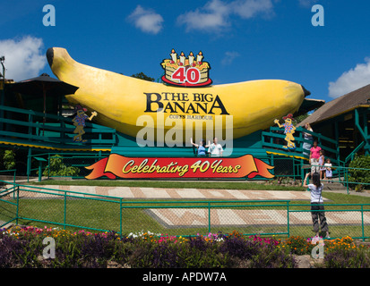 The Big Banana celebrating 40 years as a major tourist attraction at Coffs Harbour on the Pacific coast of NSW Australia - Stock Photo