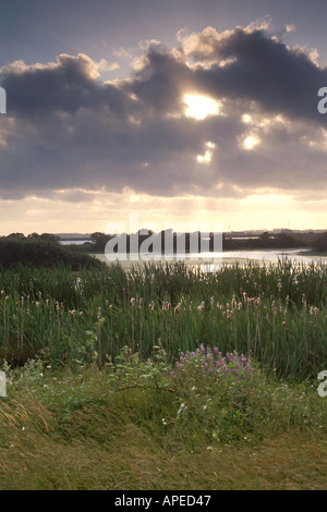 Sunset through fog clouds over reeds and wildflowers along ponds at Arcata Marsh near Eureka Humboldt County California - Stock Photo