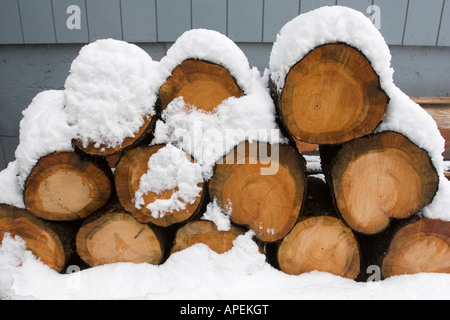 Several inches of snow on top of stack of pine wood logs piled up as firewood in storage in winter - Stock Photo
