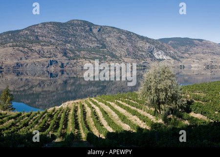 Early morning over a vineyard. - Stock Photo