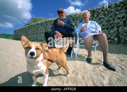 Elderly couple sit on beach with dog, eating icecreams, Newquay, Cornwall, UK - Stock Photo