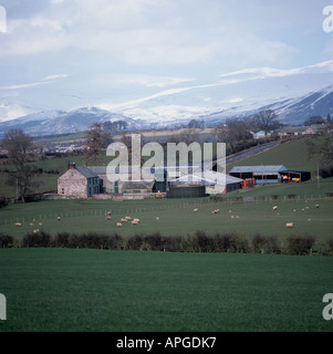 Old farm house modern farm buildings sheep grazing with snowy Pennine backdrop Westmorland - Stock Photo