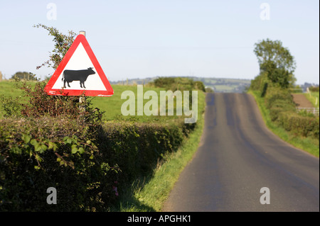 triangular red white and black cattle crossing ahead warning road sign next to country road county londonderry northern - Stock Photo