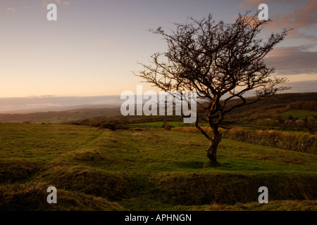 View towards Dartmoor from beside an old thorn tree - Stock Photo