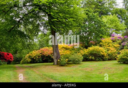 Bowood House Rhododendron Walks, Chippenham, Wiltshire, England, UK - Stock Photo