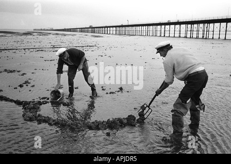 Fishermen digging for Lug worms  Southend on Sea, Pier Essex. England 1974. HOMER SYKES - Stock Photo