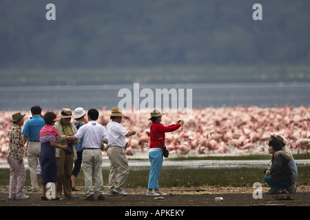 lesser flamingo (Phoenicopterus minor), and tourists, Kenya, Lake Nakuru National Park, Nakuru NP - Stock Photo