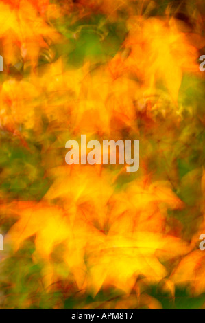 AUTUMN LEAVES, Blurry LEAVES IN WIND, Washington State, USA - Stock Photo