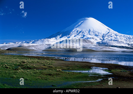Lago Chungará and Volcán Parinacota 6342m in Lauca National Park Chile - Stock Photo
