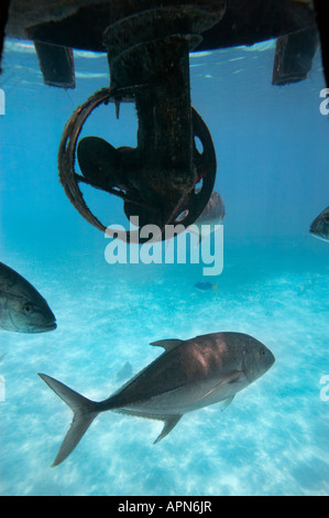 Fish and Propellor on Semi Submarine Green Island Great Barrier Reef Marine Park North Queensland Australia - Stock Photo