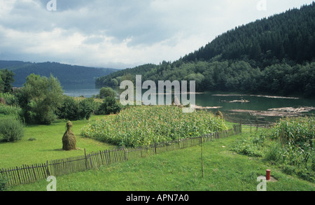 Haystacks on lake Bicaz in Maramures in the Carpathian mountain region of Romania - Stock Photo