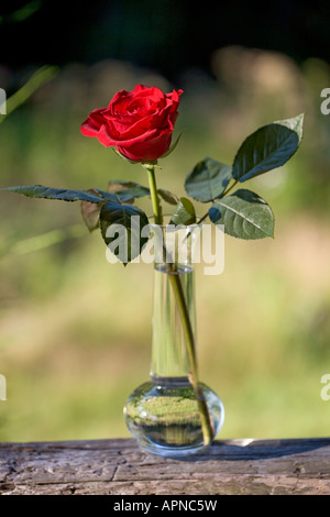 red rose in glass vase outdoor flowers one alone stem gift - Stock Photo