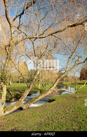 Weeping Willow tree leaning over stream at West Dean Gardens, Sussex, England - Stock Photo