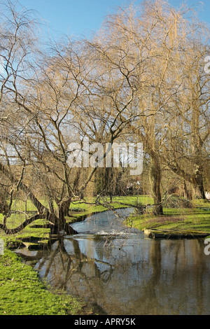 Pair of Weeping Willow trees leaning over stream at West Dean Gardens, Sussex, England - Stock Photo