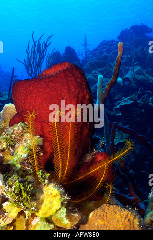 A Strawberry Vase Sponge In Little Cayman Stock Photo 27162190 Alamy