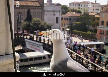 Seagul in front of Academia Bridge - Stock Photo