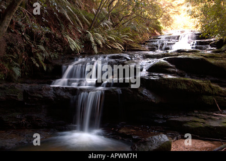Waterfall called Leura cascades falls among the trees and ferns in the Blue Mountains World Heritage Park Australia - Stock Photo