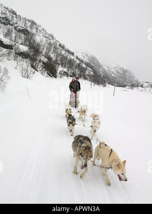 Family on a dog sled - Stock Photo