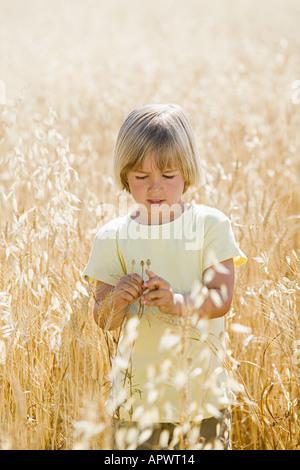 Boy in a field of wheat - Stock Photo