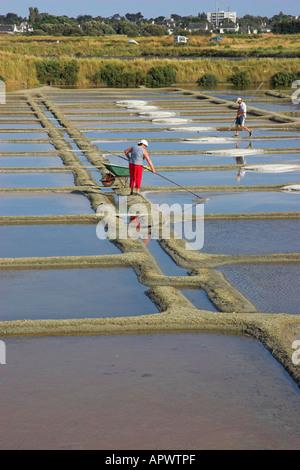 Collecting sea salt in the salt pans (Marais Salants de Guérande), Brittany, France - Stock Photo