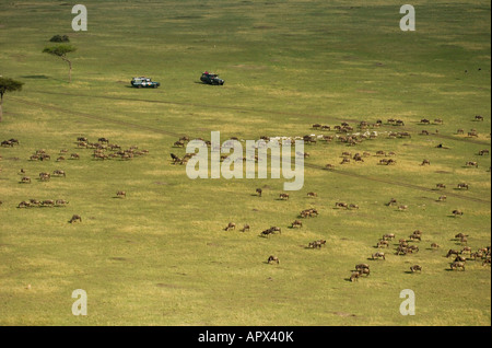 Tourists in two game viewing vehicles watching herd of wildebeest on annual migration - Stock Photo