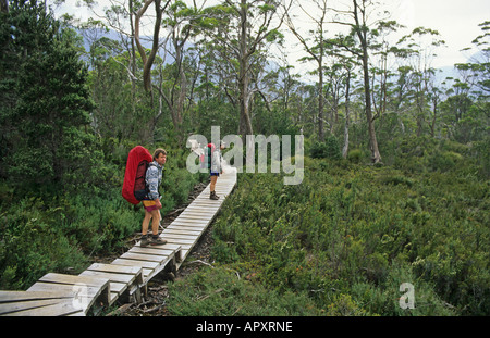 Hikers on Overland Track Cradle Mountain N P, Australia, Tasmania, Cradle Mountain National Park, walkers on 5-day - Stock Photo