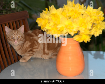 Kitten In A Vase With Flowers Stock Photo 167517848 Alamy