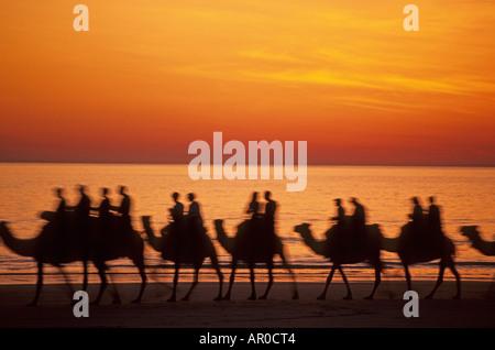Camel ride on Cable Beach, sunset, Broome, Australia, Western Australia