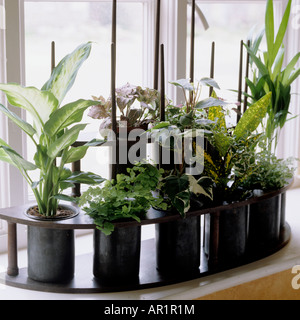 rack of small plant pots on a windowsill - Stock Photo