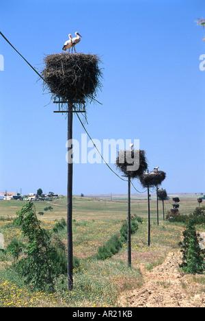 Stork nests on power poles, Alentejo, Portugal - Stock Photo