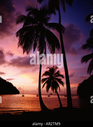 Tropical sunset on the palm fringed beach of Soufriere on the Caribbean Island of St Lucia, West Indies, Windward - Stock Photo