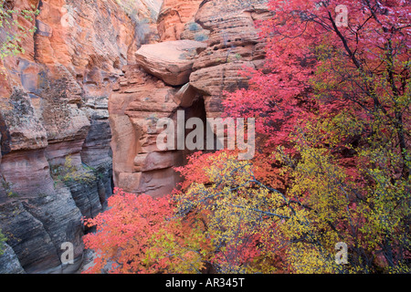 Autumn colors in Zion National Park Utah - Stock Photo