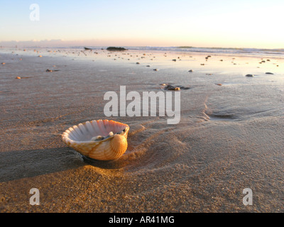 El Roqueo beach. Conil de la Frontera village, Cadiz province, Spain - Stock Photo