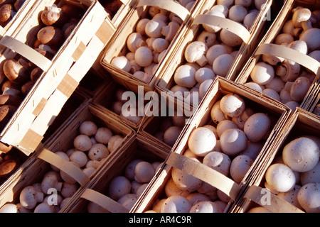 fresh mushrooms stock photo royalty free image 70049939 alamy. Black Bedroom Furniture Sets. Home Design Ideas