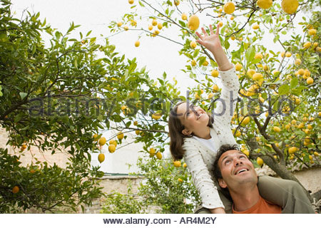 Girl on fathers shoulder carrying picking lemons - Stock Photo