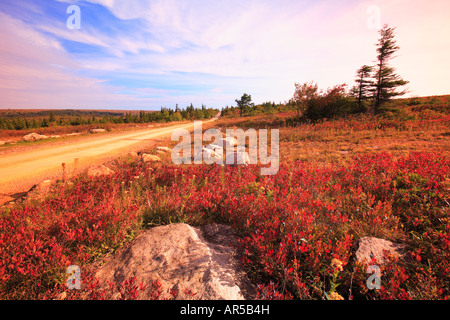 Road Through Blueberry field in fall, Dolly Sods, Hopeville, West Virginia, USA - Stock Photo